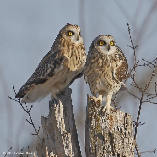 New York State Bird Watching Areas Trails Endangered Grassland Birds