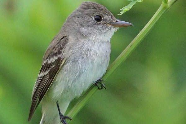 Small bird sitting on plant
