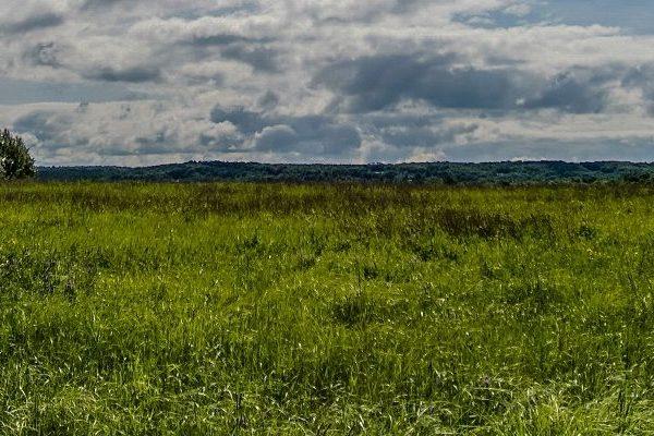 Summer grassland landscape
