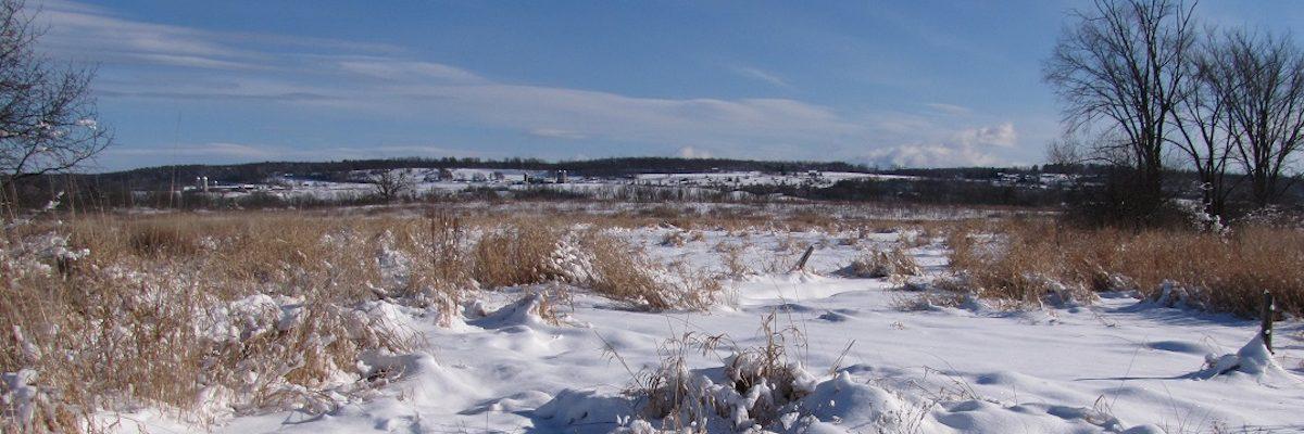 winter grassland landscape