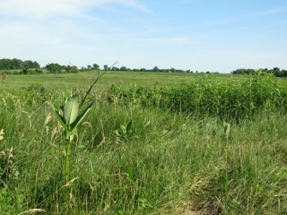 Washington County Grassland Field