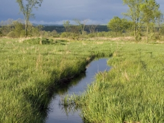Washington County Grasslands Stream