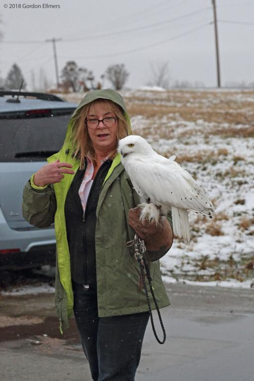 Snowy Owl on the arm of person