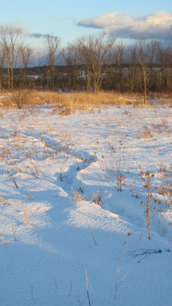 Grasslands Track
