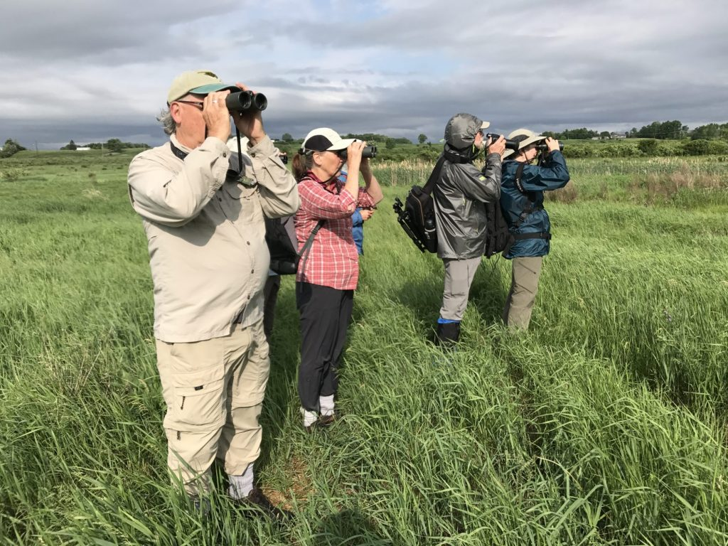 Group viewing birds with binoculars